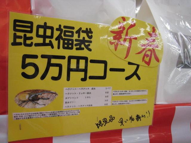 ビバホーム 昆虫福袋