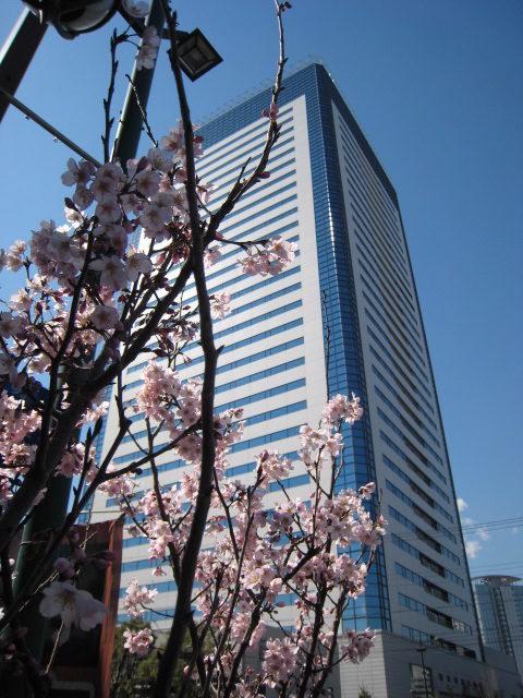 豊洲の小さな春風景
