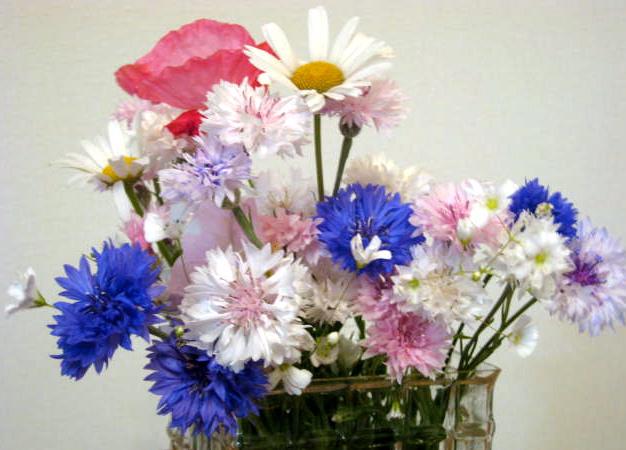 お台場でお花摘み♪