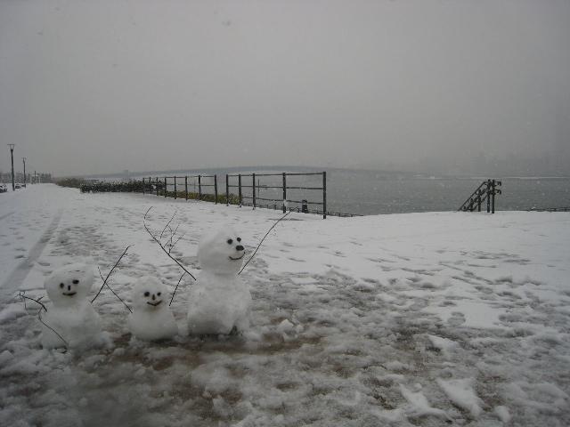 再び雪の豊洲