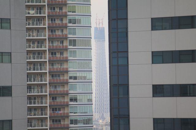 豊洲から見える・・東京スカイツリー