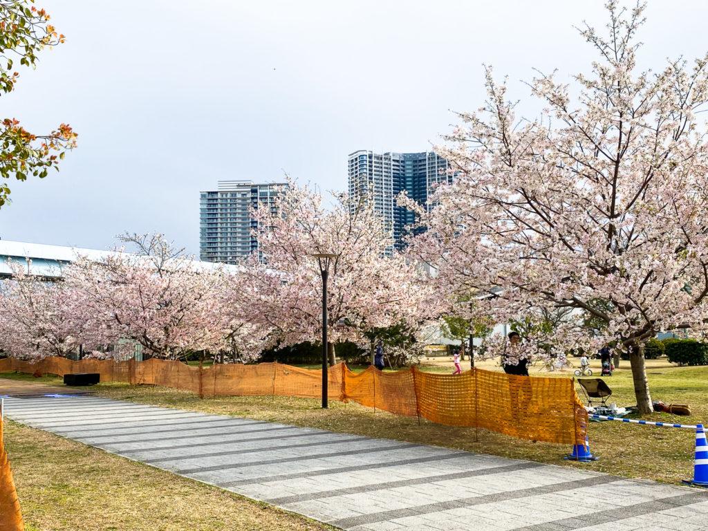 豊洲の桜 2020(1)